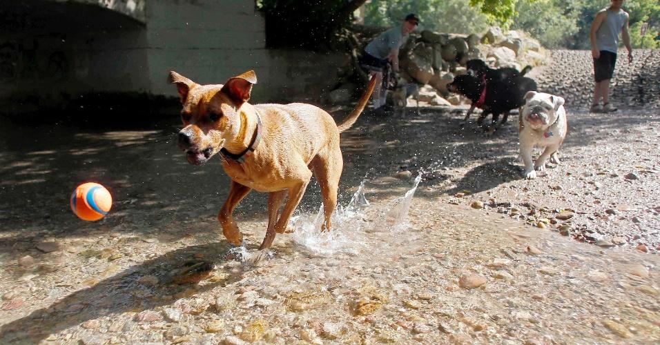 30.jun.2012 - Cachorros brincam em córrego em Salt Lake City, Utah, Estados Unidos, onde a temperatura chega se aproxima dos 40ºC