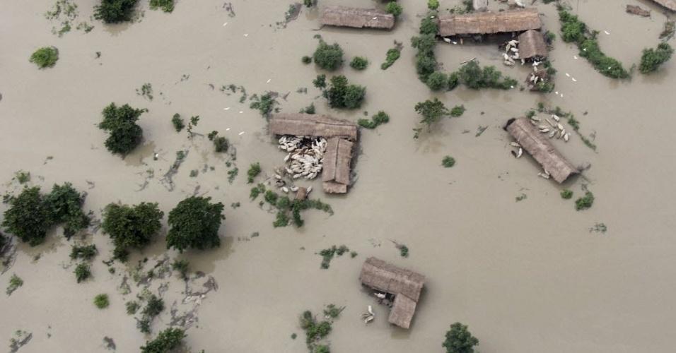 2.jul.2012 - Manadas de búfalos se aglomeram em área totalmente alagada no distrito de Sonitpur, na Índia. As chuvas comuns da temporada de monções já mataram mais de 60 pessoas, segundo a imprensa local