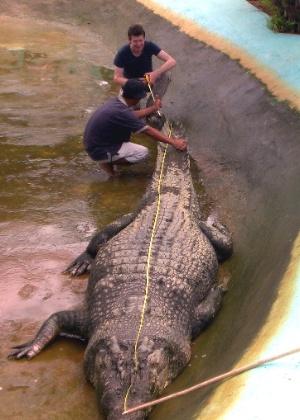 Capturado nas Filipinas, o crocodilo marinho Lolong<br> é o maior da espécie criado em cativeiro - Richard Grande/AFP