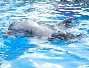 Esse é o mais novo filhote do parque SeaWorld