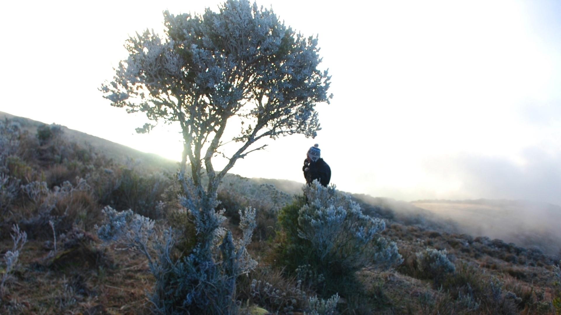 13.jul.2012 - O amanhecer registrou temperatura de zero grau em Urupema (SC), onde houve formação de geada e do fenômeno conhecido como sincelo (congelamento de gotas d?água)