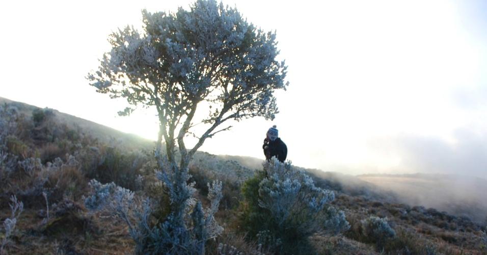 13.jul.2012 - O amanhecer registrou temperatura de zero grau em Urupema (SC), onde houve formação de geada e do fenômeno conhecido como sincelo (congelamento de gotas d´água)