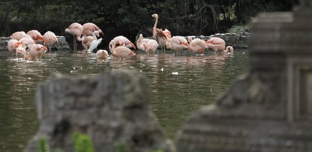 Grupo de Flamingos aproveita o dia em lago do zoológico - Leo La Valle/Efe