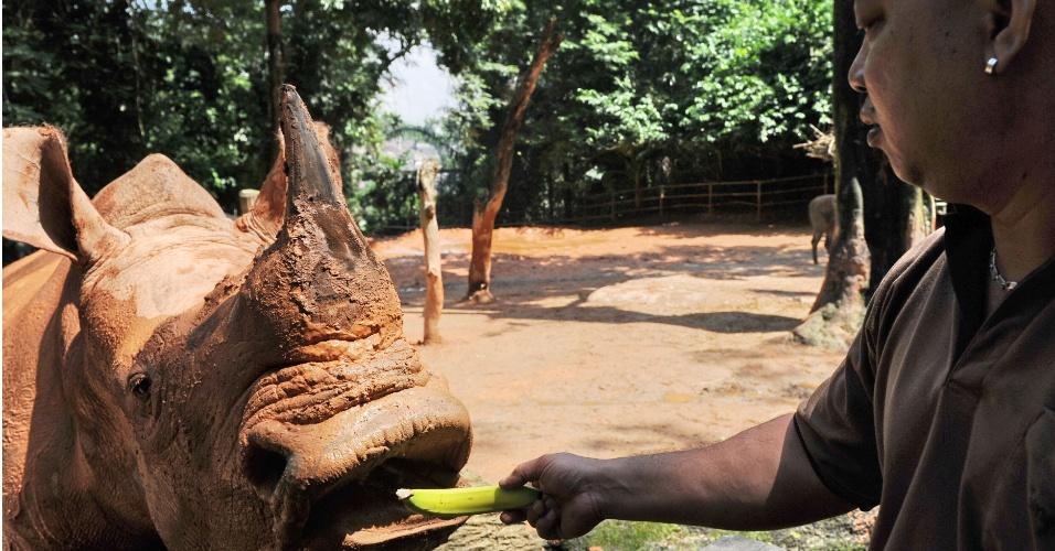 17.jul.2012 - Rinoceronte-branco é alimentado com banana no zoológico de Cingapura, nesta terça-feira (17). O zoo do país é o que tem mais animais dessa espécia: são oito