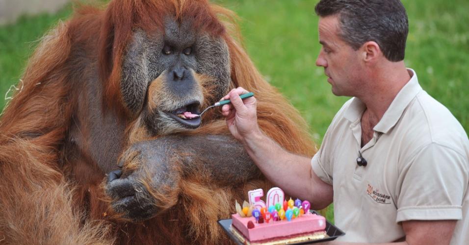 17.jul.2012 - Orangotango mais velho em cativeiro ganha bolo na França