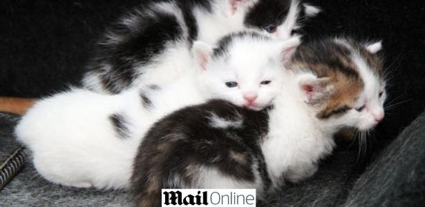 Pobre gatinhos!! Por muita sorte, eles estão vivos e bebendo leite alegremente na firma de sucata - Reprodução/Daily Mail