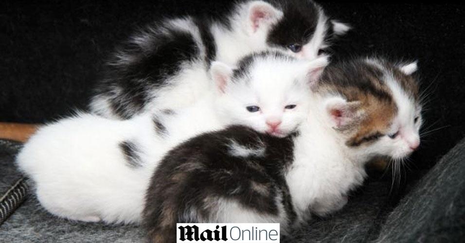 Miado salva gatinhos de virarem sucata dentro de carro velho