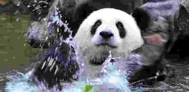 Panda-gigante em lago - Lu Boan/Xinhua/AE  - Lu Boan/Xinhua/AE