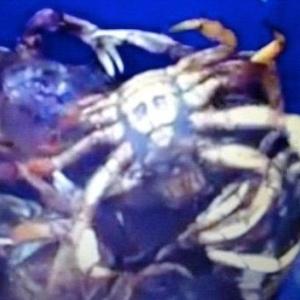 22.jul.2012 - Família acha imagem de Jesus -- ou seria Osama Bin Laden? -- em caranguejo