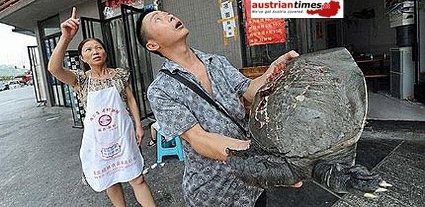 Chinês é atingido por tartaruga ?voadora? no meio da rua