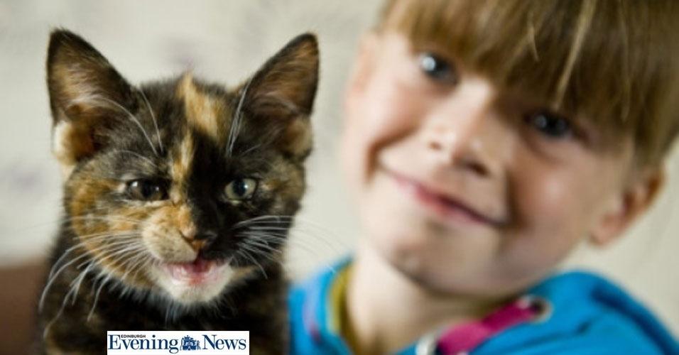 """Curiosidade quase mata gato após """"banho"""" em máquina de lavar"""