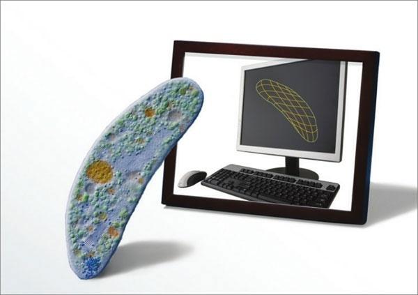 """Cientistas da Universidade de Stanford, nos EUA, criaram o primeiro modelo virtual de um organismo vivo. A bactéria """"Mycoplasma genitalium"""" foi a escolhida por ser a menor bactéria viva do mundo."""