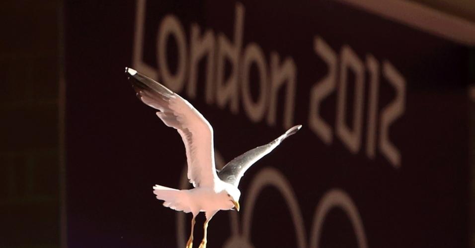 Pássaro sobrevoa o Millennium Stadium durante o jogo entre Nova Zelândia e Reino Unido no futebol feminino (25/07/2012)
