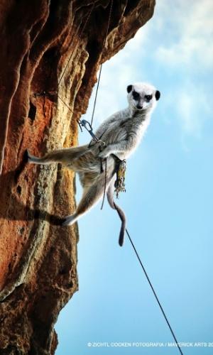 Calendário dos suricatos radicais: escalada