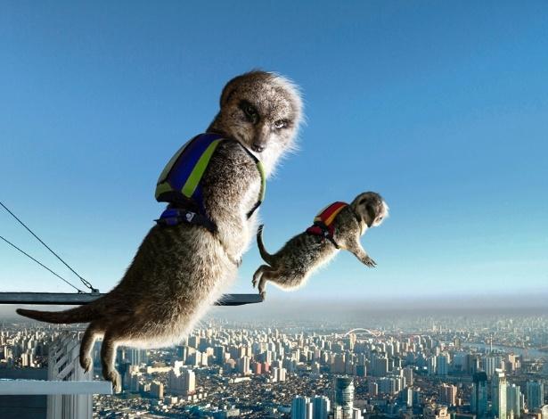 Calendário dos suricatos radicais: paraquedismo
