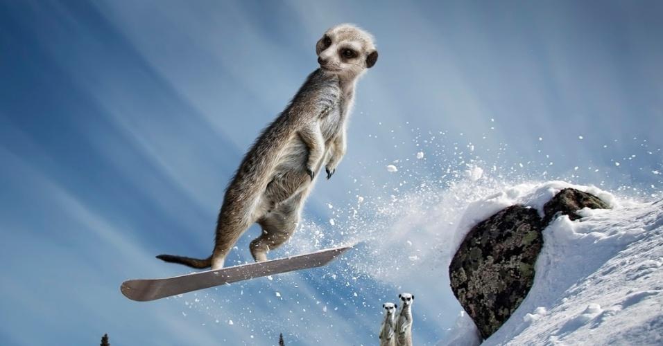 Calendário dos suricatos radicais: snowboard