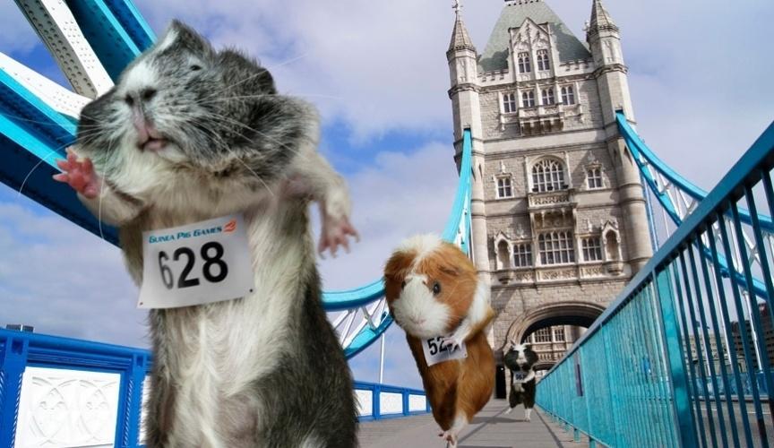 Calendário Olimpíadas dos Porquinhos da Índia: maratona