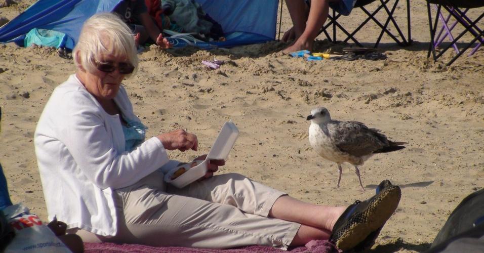 Dois habitués das praias inglesas: uma idosa e uma gaivota dividem as areias de Weymouth