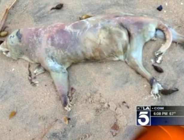 Animal não identificado é encontrado nas areias de uma praia de Seal Beach, no Estado da Califórnia (EUA)
