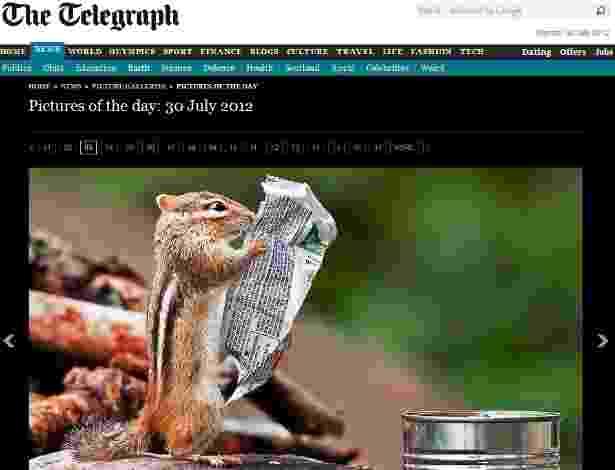 """E quem disse que os animais também não se preocupam com as calorias e os nutrientes do alimento? Esquilo é flagrado segurando embalagem, como se estivesse lendo as informações nela escritas. A cena foi registrada pelo fotógrafo Michael Higgins em um parque em Ontário, no Canadá, segundo o jornal inglês """"Daily Telegraph"""" - Reprodução/Daily Telegraph"""