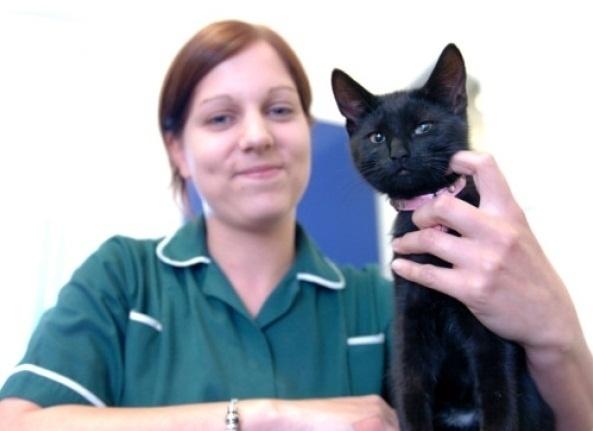 """Um gatinho de apenas cinco meses de idade foi encontrado com a boca colada em Yoden Way, Peterlee, no Reino Unido. O animal, segundo o jornal """"Hartlepool Mail"""", foi levado a um hospital veterinário da região, onde a cola foi removida"""