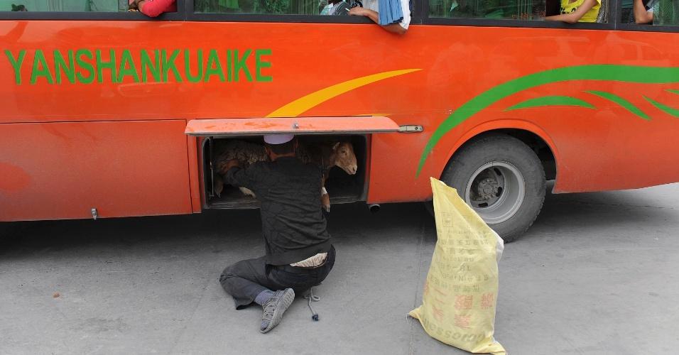 1.ago.2012 - Será que vai caber? Para não deixar seu bichinho de estimação de fora da viagem de férias, homem da etnia uigur coloca ovelha no bagageiro de um ônibus em uma rodoviária em Aksu, na região autónoma de Xinjiang, na China