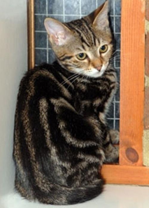 """Um gatinho de seis semanas de idade sobreviveu a uma viagem de nove dias escondido no bagageiro de um trailer. Ele saiu de Istambul, na Turquia, e foi parar em Dartford, na Inglaterra. """"Yonda"""", assim como foi chamado, estava acompanhado de outro gato que não sobreviveu ao passeio clandestino"""