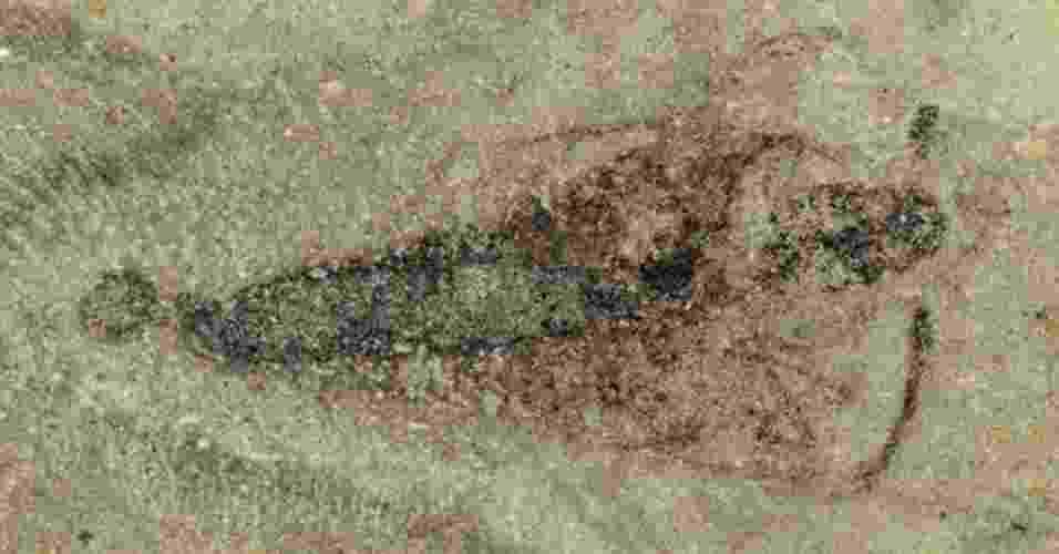 2.ago.2012 - Cientistas do Museu Nacional de História Natural da França anunciaram a descoberta do primeiro fóssil completo com 365 milhões de anos de um inseto pré-histórico com 8 milímetros de comprimento, tórax separado da cabeça e do abdome e três pares de patas. O fóssil do Strudiella devonica, que teria existido no período Devoniano Superior, foi descoberto pela equipe de André Nel em um sítio da localidade de Strud (província de Namur), na Bélgica. A descoberta foi publicada na revista científica britânica Nature - Nature