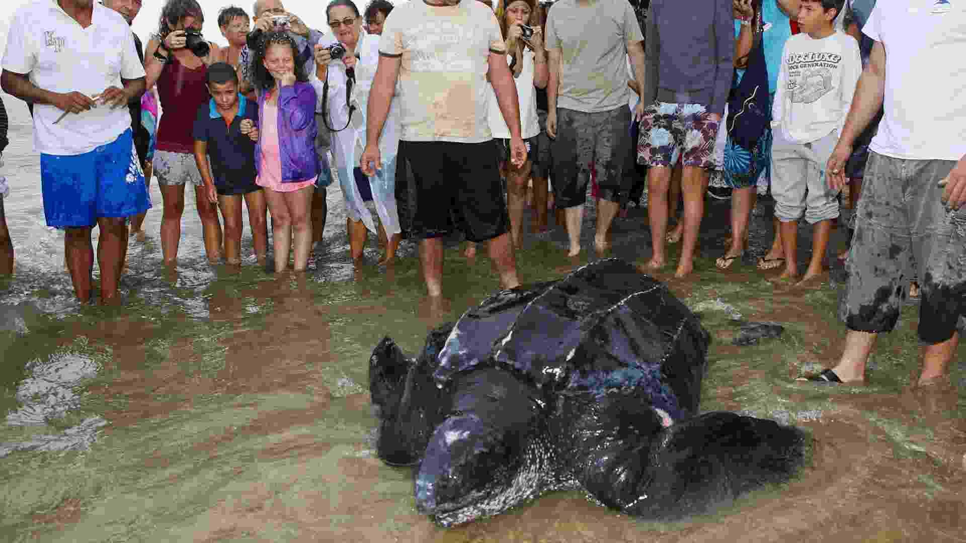 6.ago.2012 - Uma tartaruga de 320 quilos e dois metros de comprimento, procedente de Trinidad e Tobago, no Caribe, foi encontrada nesta segunda (6), na França, em uma praia do Mar Mediterrâneo. A tartaruga estava levemente ferida quando foi achada e logo depois foi devolvida ao mar - Jerome Roux/AFP