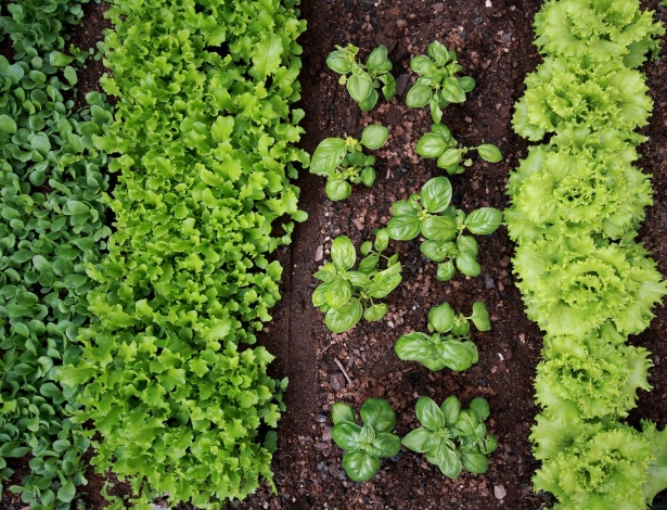 Uma vantagem do cultivo no inverno é a escassez de chuvas fortes que podem danificar as hortaliças  - Getty Images