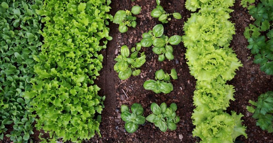 Hortaliças cultivadas no jardim
