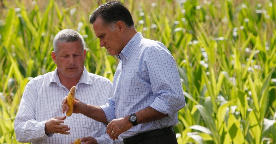 8.ago.2012 - Candidato republicano à presidencia dos Estados Unidos, Mitt Romney, inspeciona uma espiga de milho com o secretário da Agricultura de Iowa, Bill Northey, em uma fazenda de Des Moines, no Estado americano de Iowa. Faltando três meses para as eleições, Barack Obama se mantém à frente de Romney