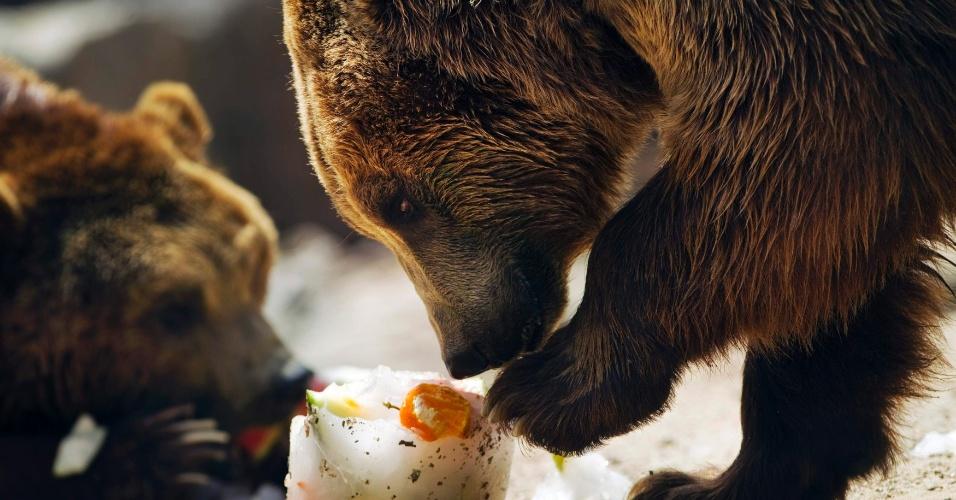 9.ago.2012 - Ursos comem fruta no zoológico de Madri, na Espanha. A cidade enfrenta uma onda de calor que já chegou a superar 40ºC