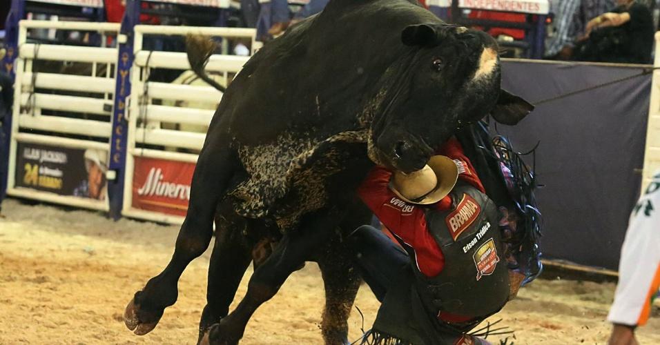 17.ago.2012 - Peão cai de touro durante prova de montaria no segundo dia da Festa do Peão de Barretos, no interior de São Paulo, que teve início na noite de quinta-feira (16)