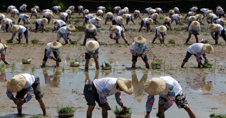 18.ago.2012 - Agricultores plantam mudas de arroz nesta sábado (18), no condado de Taoyuan, no norte de Taiwan