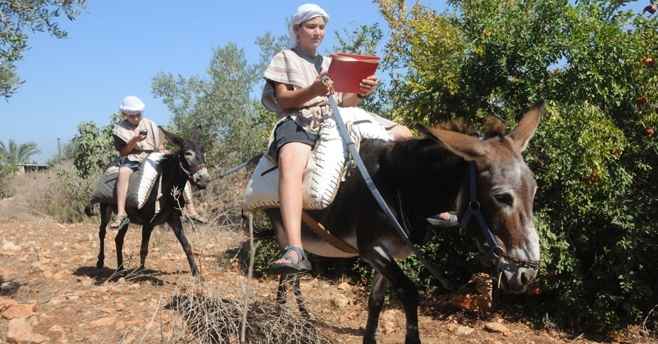 Burro jumento wi-fi israel internet