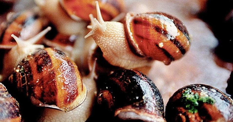 Escargot, criação de escargot