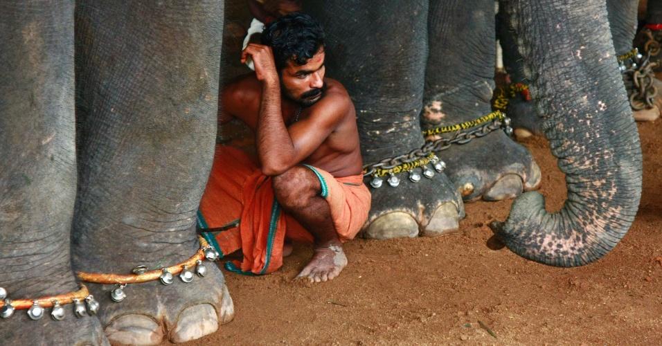 29.ago.2012 - Homem descansa nesta quarta-feira (29) entre patas de elefantes durante o festival de Onam, na cidade indiana de Kochi