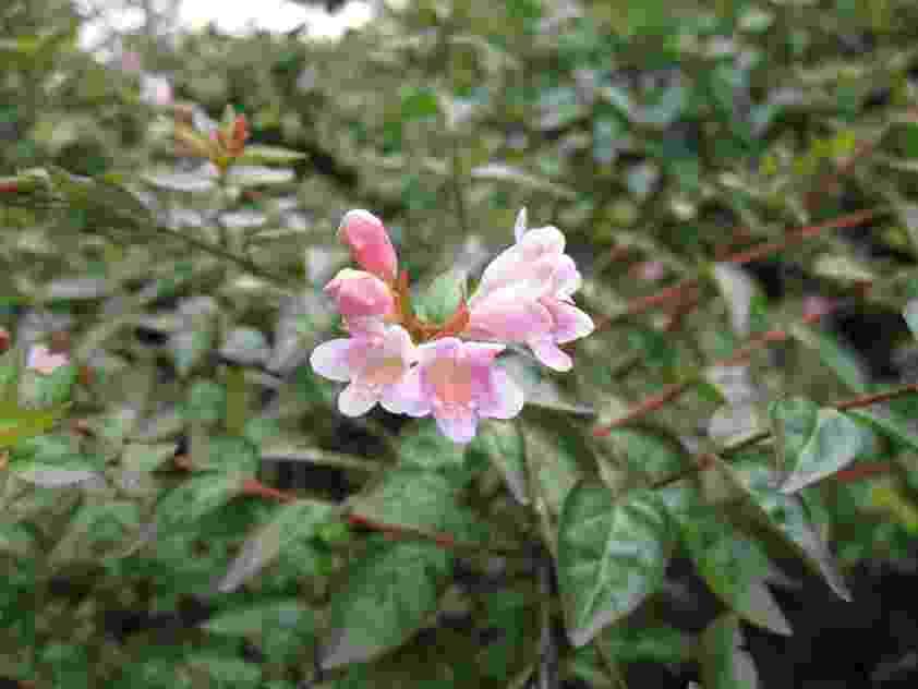 Heloiza Rodrigues – A Prima Plantarum/ Divulgação