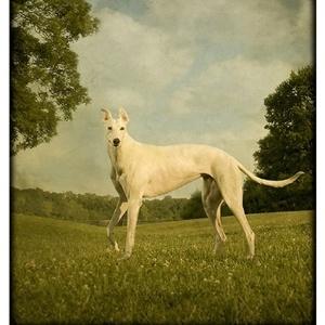 Cão Tooky - Andrew Pinkham