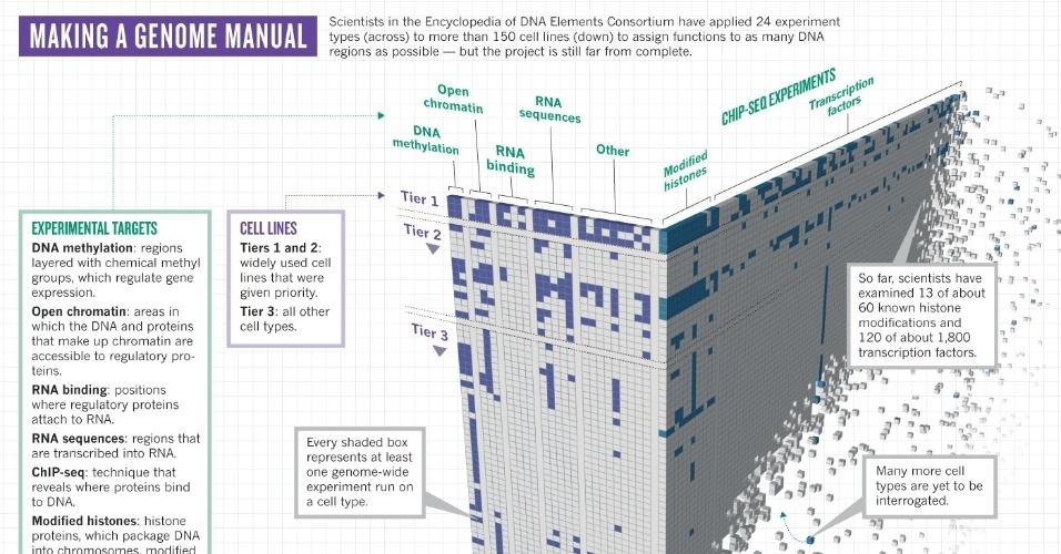 """05.set.2012 - Ilustração mostra o mapeamento do genoma humano que está sendo feito pelo projeto Encode (Enciclopédia dos Elementos do DNA), que reúne estudos de mais de 440 cientistas. Pesquisadores descobriram que cerca de 80% do DNA considerado inútil, apelidado de """"DNA lixo"""", executa ao menos uma função biológicas nas células. Esta parte do genoma é formada por 4 milhões de """"interruptores"""" que determinam quando e onde os genes são ligados ou desligados, conforme o tipo de célula, ou seja, este sistema é o grande responsável pelo funcionamento dos genes. Por isso, explicam os estudiosos, as análises focadas nos genes, e não nos trechos reguladores, não acham todas as causas das doenças, por exemplo. Mas os cientistas do Encode avisam que eles estão longe, ainda, de encontrar a base genética das doenças. O projeto examinou, até agora, 13 das 60 principais proteínas que são fundamentais para a regulação dos genes e 120 dos 1.800 fatores de modificação"""