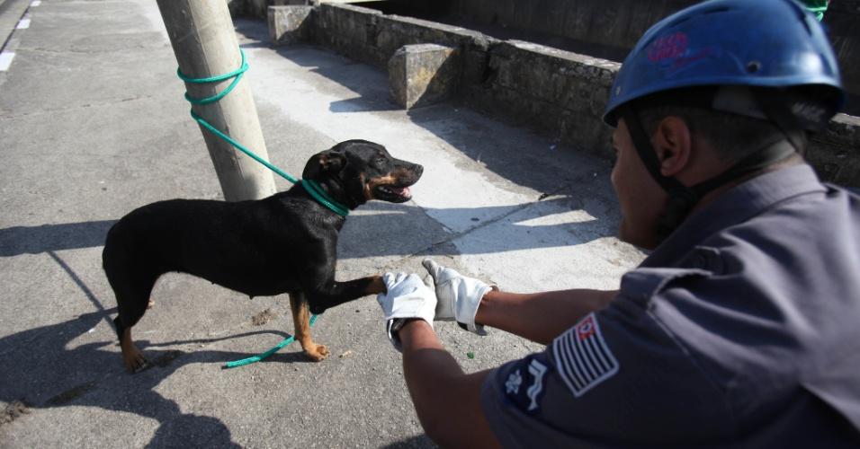 05.set.2012 - Um cão que caiu no rio Tamanduateí, nas proximidades da estação Armênia do metrô, na zona norte de São Paulo, foi resgatado pelos bombeiros na manhã desta quarta- feira (05). O animal não apresentava ferimentos