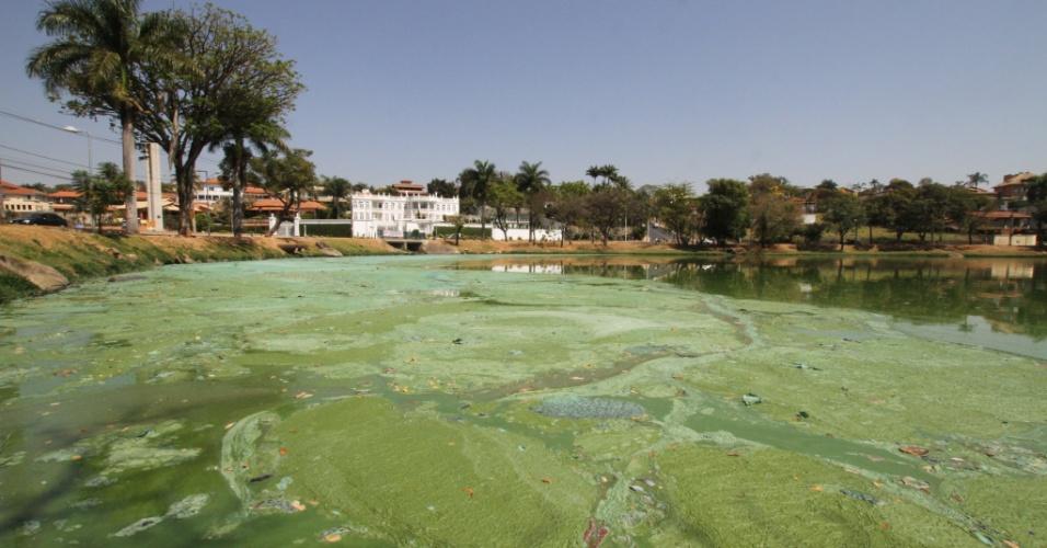 11.set.2012 - A lagoa da Pampulha, um dos pontos turísticos mais visitados de Belo Horizonte, apresenta trechos com poluição nas águas