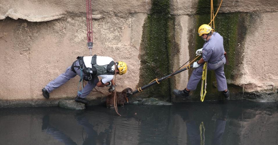 11.set.2012 - Bombeiros resgataram um cão que nadava no rio Tamanduateí, na capital paulista