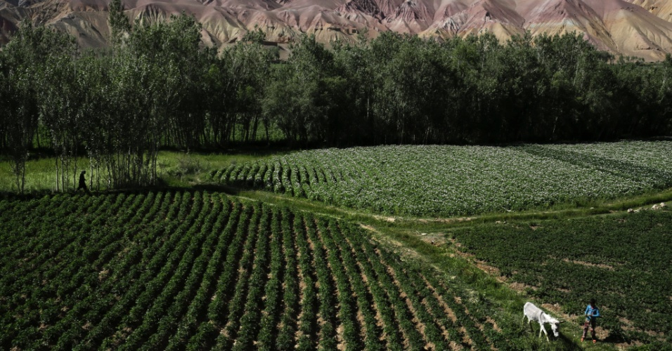 """11.set.2012 - Um menino caminha com seu jumento em um campo de batata em Bamiyan, no Afeganistão, local onde os agricultores terão de desistir das terras para as escavações. Ainda que o país tenha cerca de US$ 1 trilhão em recursos naturais - incluindo petróleo, ouro e cobre - para ser explorado, os afegãos dizem que a """"esperança de autossuficiência é temperada por preocupações sobre a corrupção e a segurança"""""""
