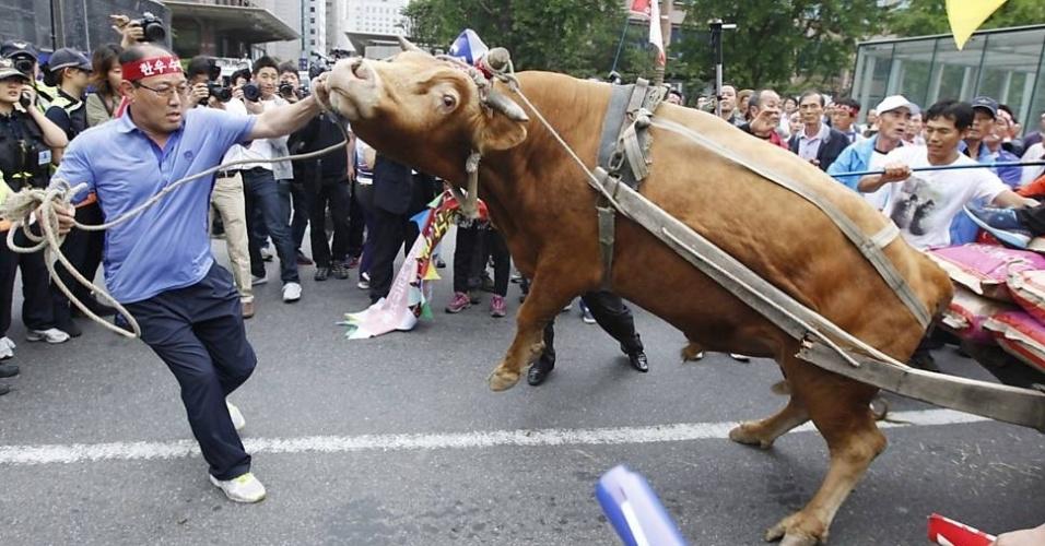 12.set.2012 - Agricultor segura boi durante protesto nesta quarta-feira (12) em frente à Assembleia Nacional de Seul, na Coreia do Sul. Criadores de gado exigem que o governo tome medidas contra a queda do preço local