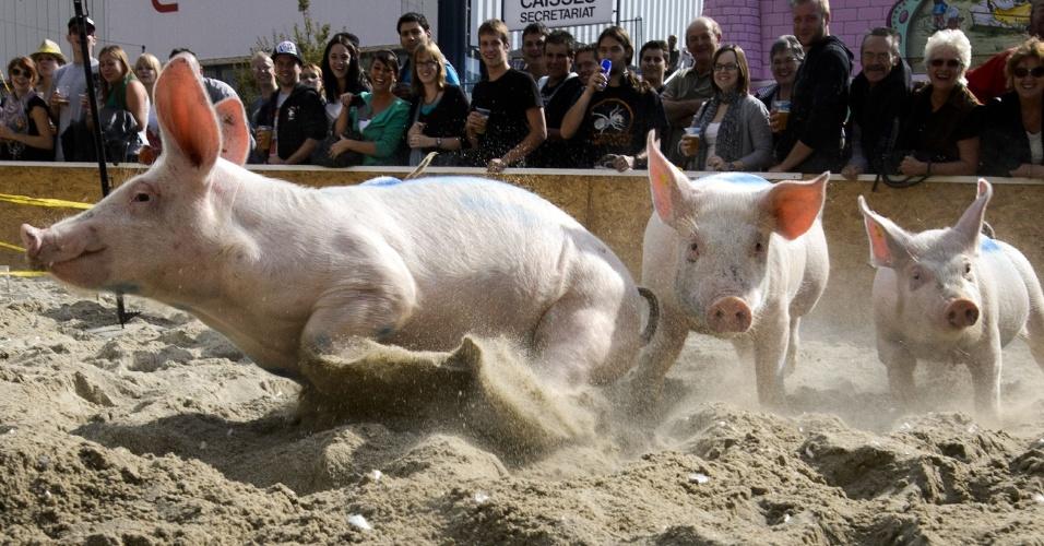16.set.2012 - Porquinhos participam de corrida em feira agrícola, em Lausanne, na Suíça