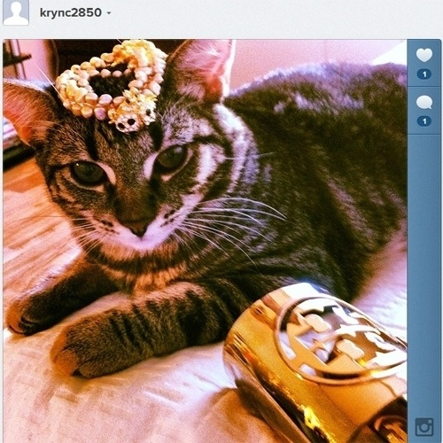 Gatos ricos do Instagram
