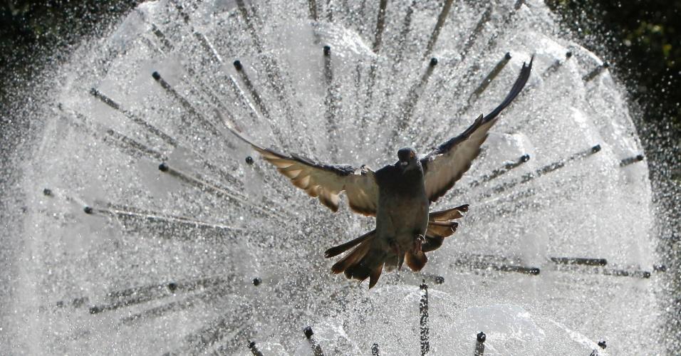 19.set.2012 - Um pombo voa em frente a uma fonte no centro de Donetsk, na Ucrânia