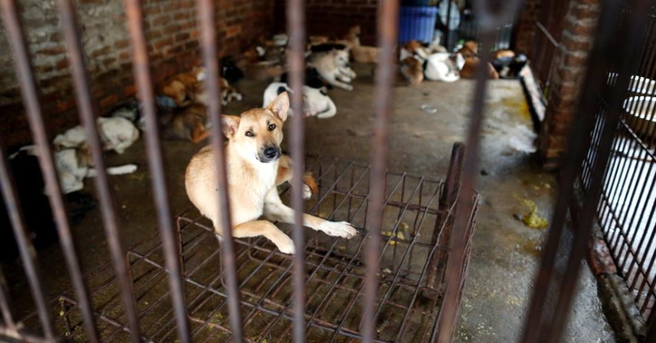 20.set.2012 - Cachorros são enjaulados para serem vendidos para consumo humano nesta quinta-feira (20), em Hanói, no Vietnã
